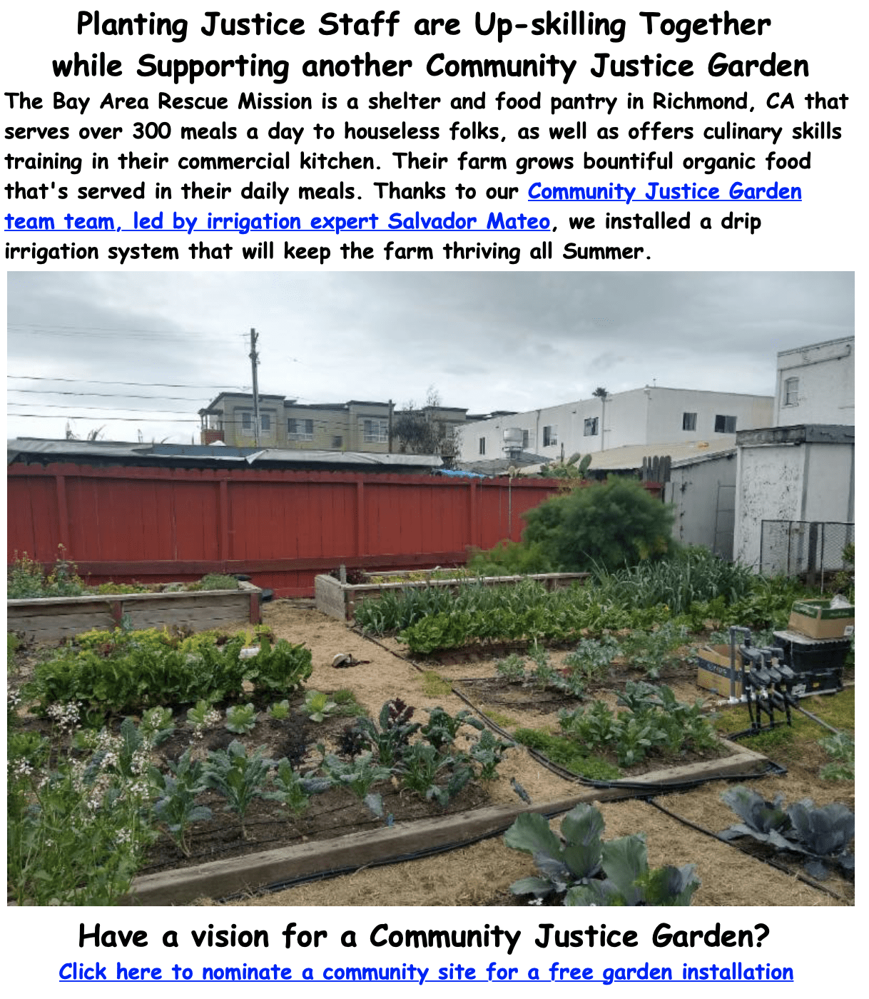 Important Announcement Advancing Food Justice @ Adachi! 11 image asset