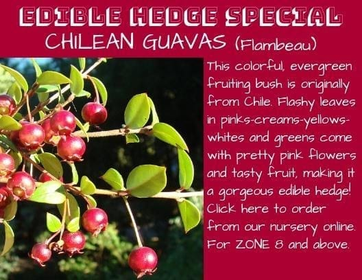 Don't miss this season's specials from the Planting Justice Nursery in Oakland 1 ediblehedge