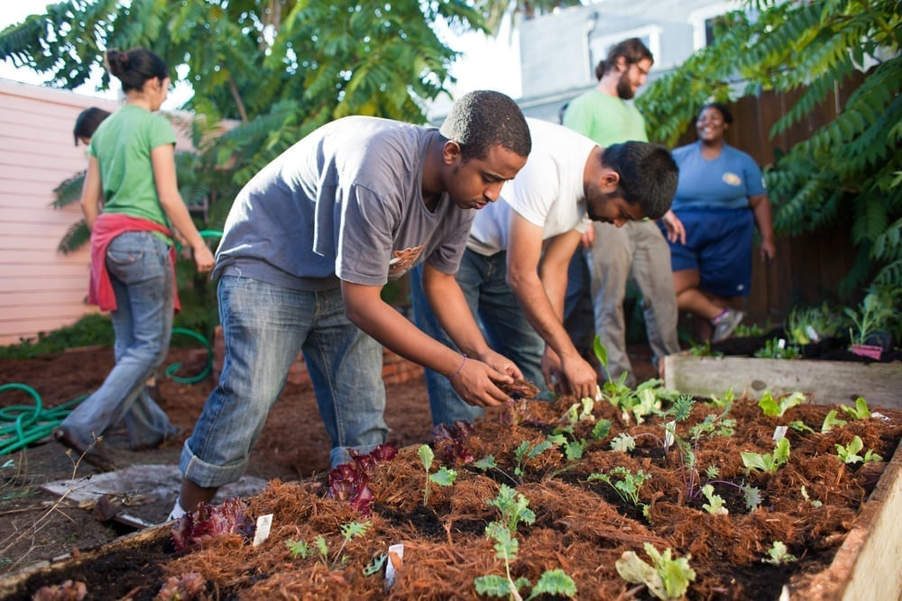 Urban Permaculture 5160292690 a6d4f33490 o 1