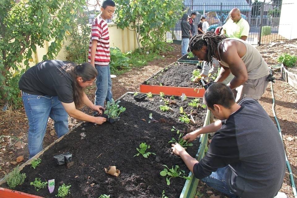 Jardín Comunitario Y Centro de Justicia IMG 0412