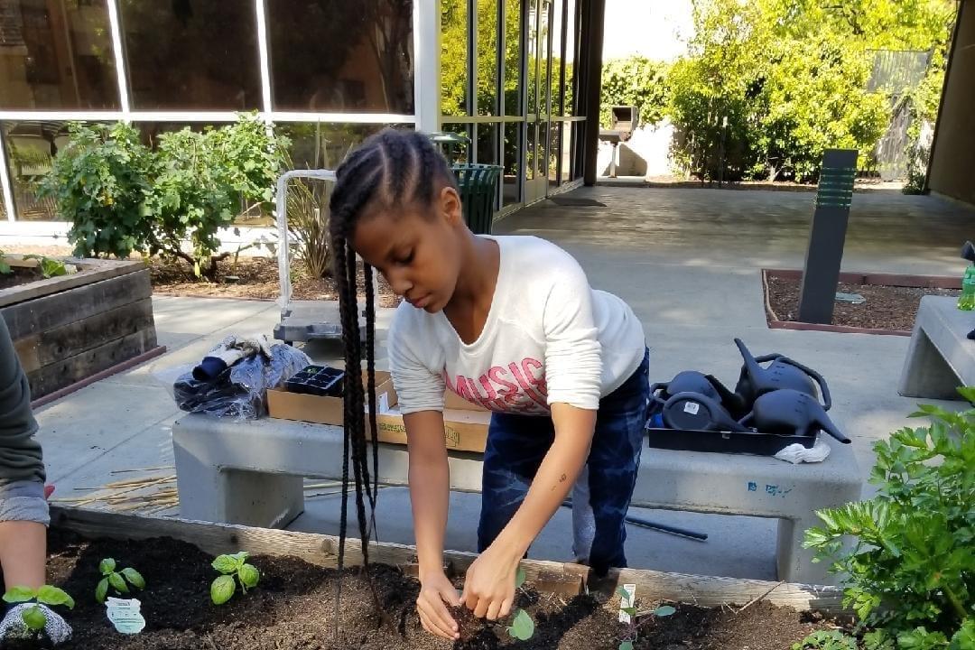 Community Justice Garden Hub aa2