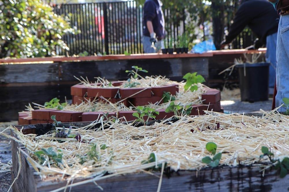 Community Justice Garden Hub cr10