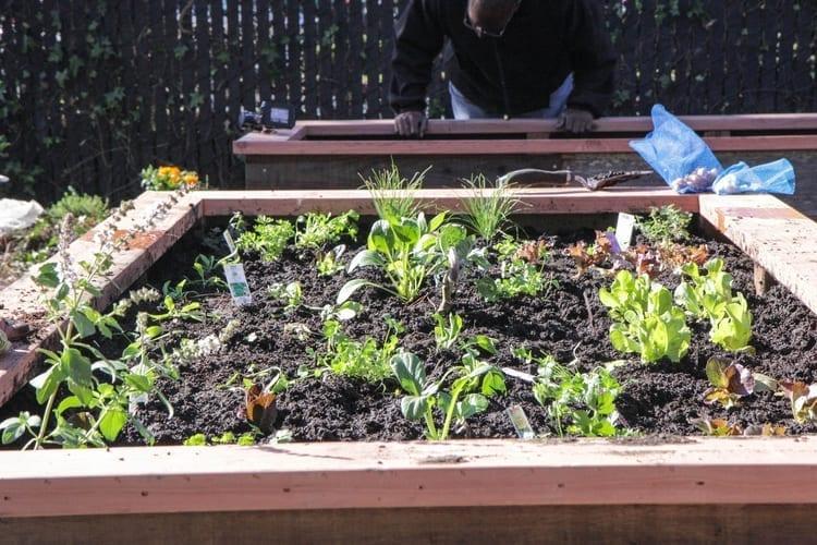 Community Justice Garden Hub cr3
