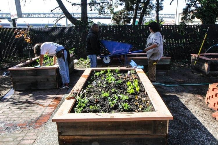 Community Justice Garden Hub cr4