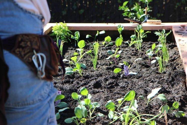 Community Justice Garden Hub cr5