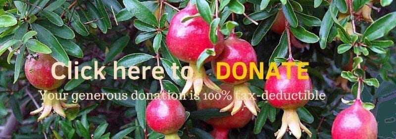 Important Announcement Advancing Food Justice @ Adachi! donate