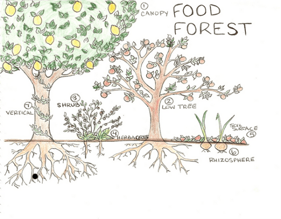 Constructing a Food Forest food forest