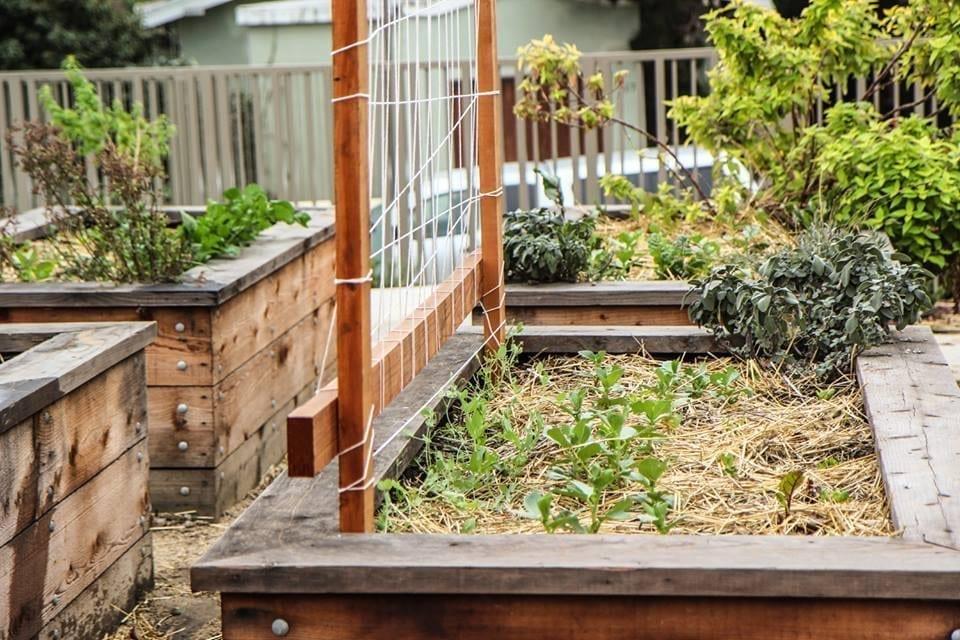 Community Justice Garden Hub kp3