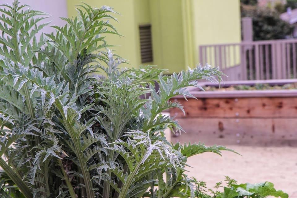 Community Justice Garden Hub kp6