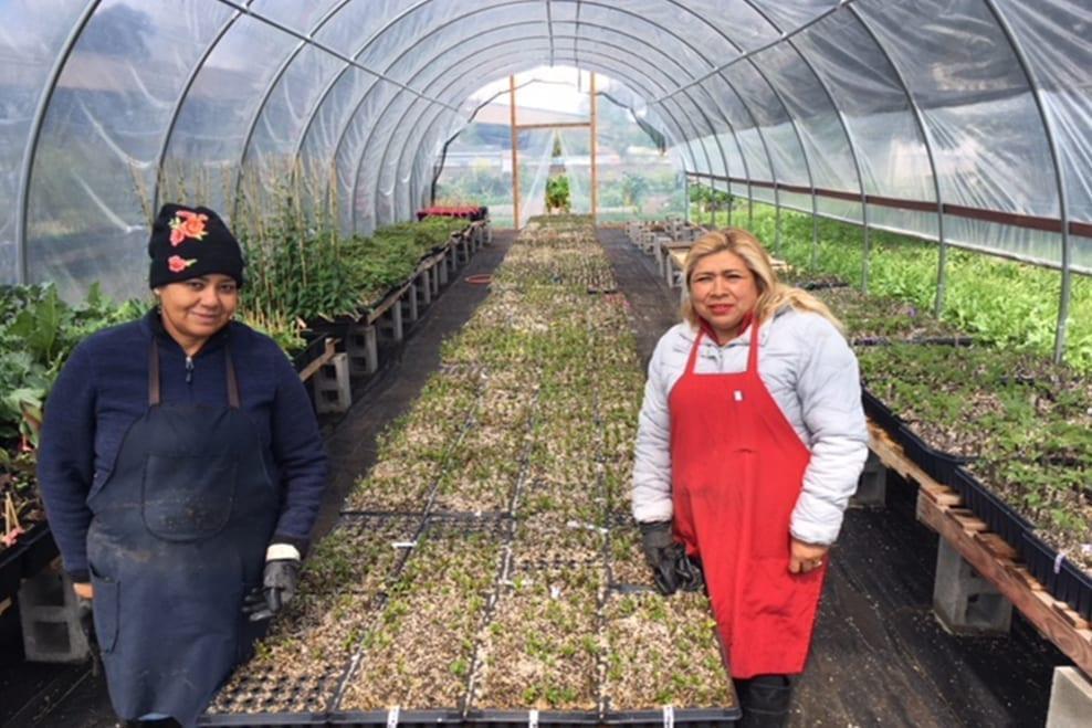 The Planting Justice Nursery + Sogorea Te' Land Trust nurserypic c