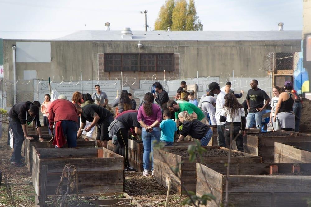 Community Justice Garden Hub qg5