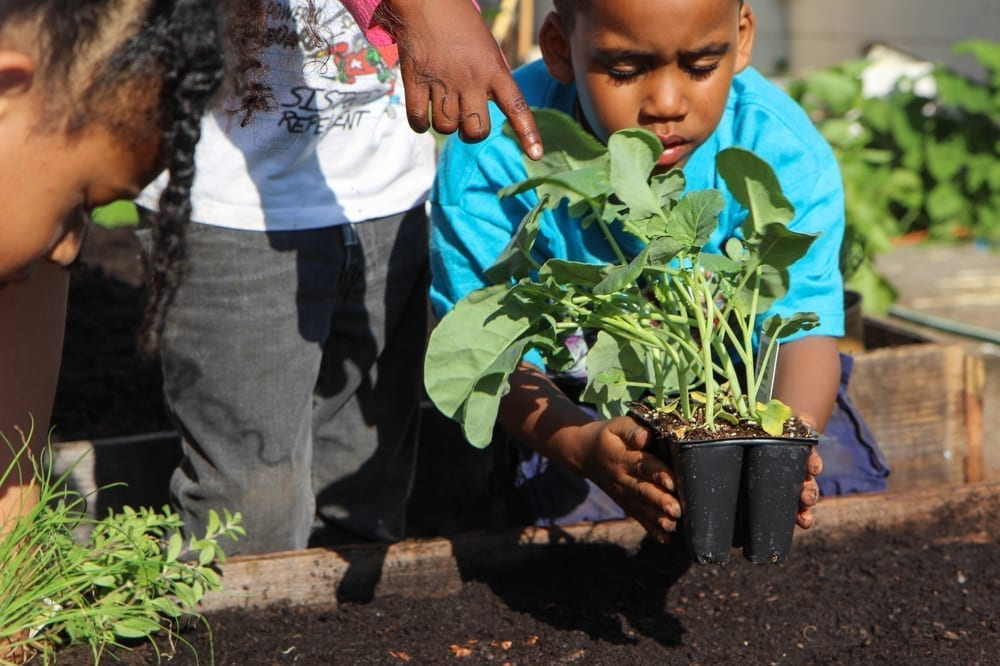 Community Justice Garden Hub rb3