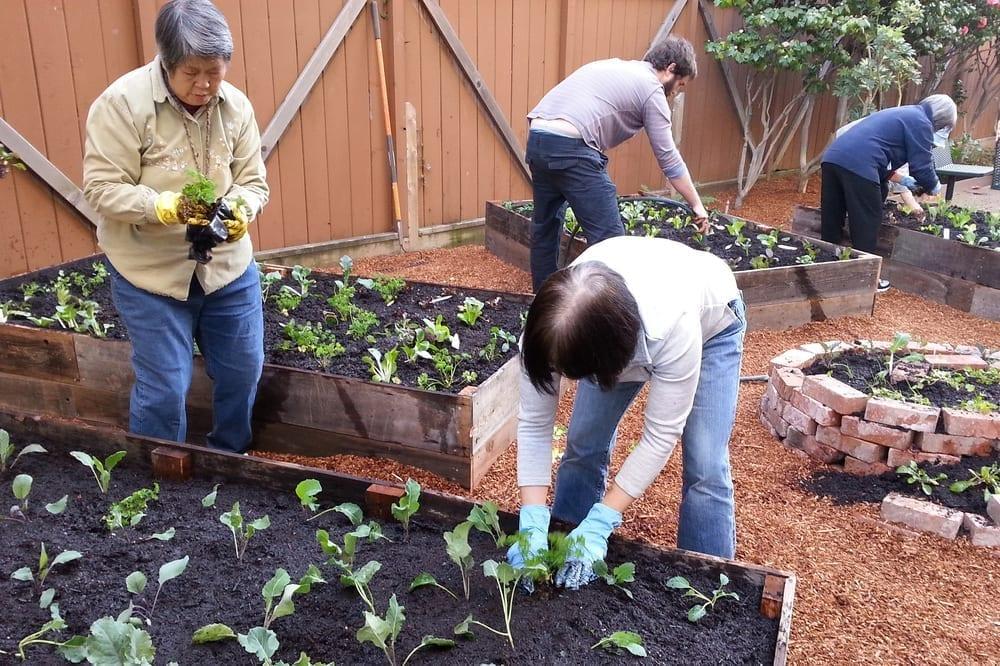 Community Justice Garden Hub sl2