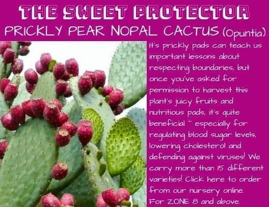 Don't miss this season's specials from the Planting Justice Nursery in Oakland sweetprotector