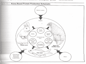 Urban Permaculture urban animal husbandry