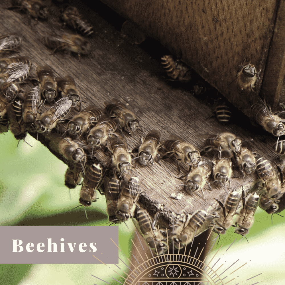 Transform Your Yard beehives