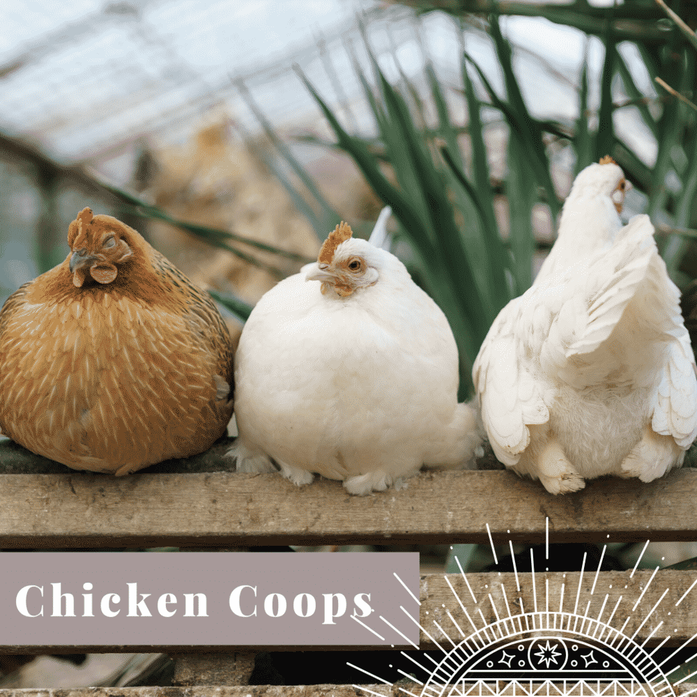 Transform Your Yard chicken coop