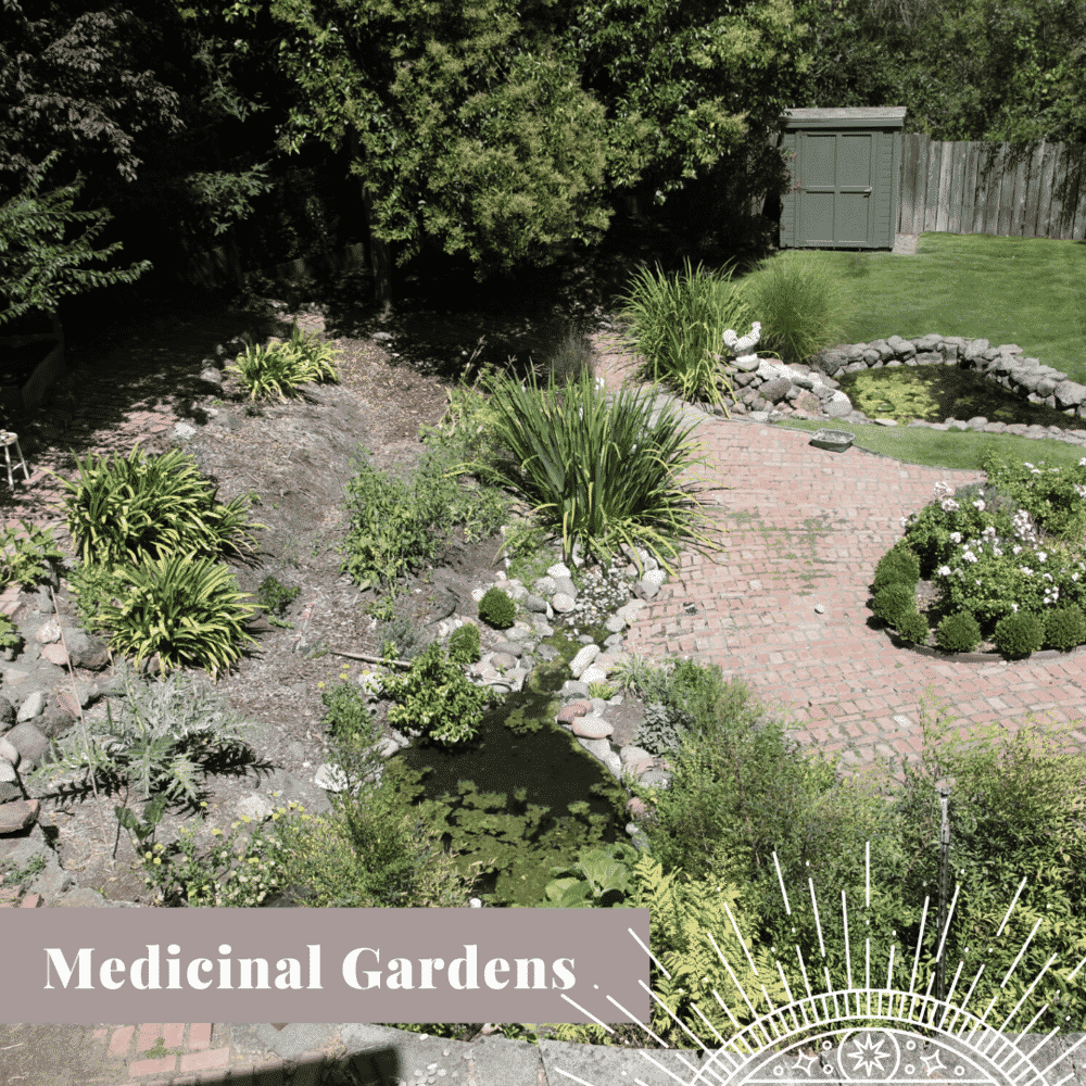 Transform Your Yard medicinal garden graphic