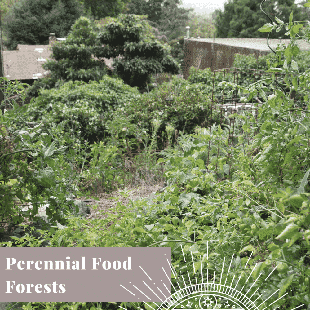 Transform Your Yard perennial food forests