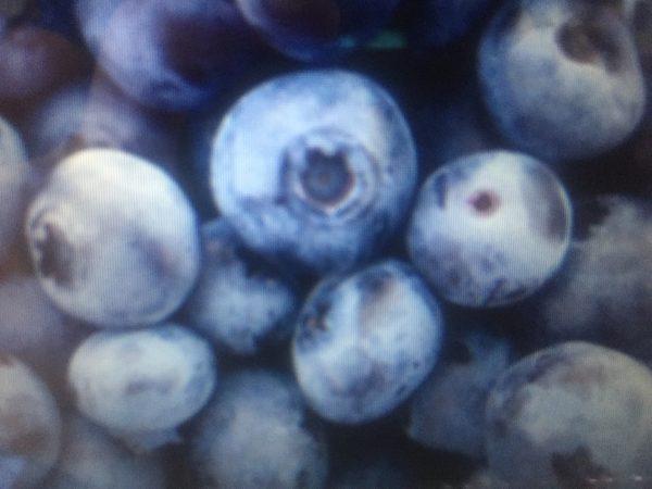 Brunswick Blueberry img 7594 scaled
